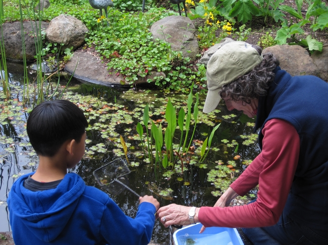 "First Place, UC Master Gardeners in Action: ""Learning about Critters in a Pond,"" by Peggy Chipkin Marin County"