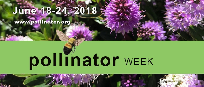 http://pollinator.org for UC Master Gardener Program Statewide Blog Blog
