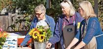 176997 for UC Master Gardener Program Statewide Blog Blog