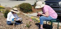 UC Master Gardeners of San Joaquin County, Kate Vizcarra and Janet Nimtz, evaluate roses for its foliage, flowers and form. (Photo Credit: Marcy Sousa) for UC Master Gardener Program Statewide Blog Blog