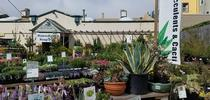 PlantRight is bringing back its annual Spring Retail Nursery Survey for 2020. Photo: ©PlantRight for UC Master Gardener Program Statewide Blog Blog