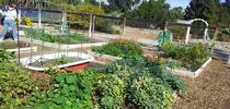 The Grow Lab provides a hands-on laboratory for UC Master Gardener trainees and a venue for UC Master Gardeners to educate the public on innovative vegetable gardening techniques in Riverside County. for UC Master Gardener Program Statewide Blog Blog