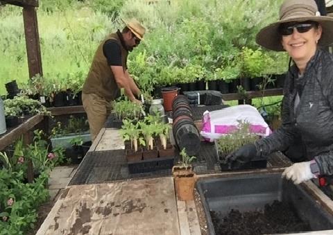 Ned Lange and Devra Laner preparing tomoto starts. both wearing large gardening hats while working at a wooden garden table.