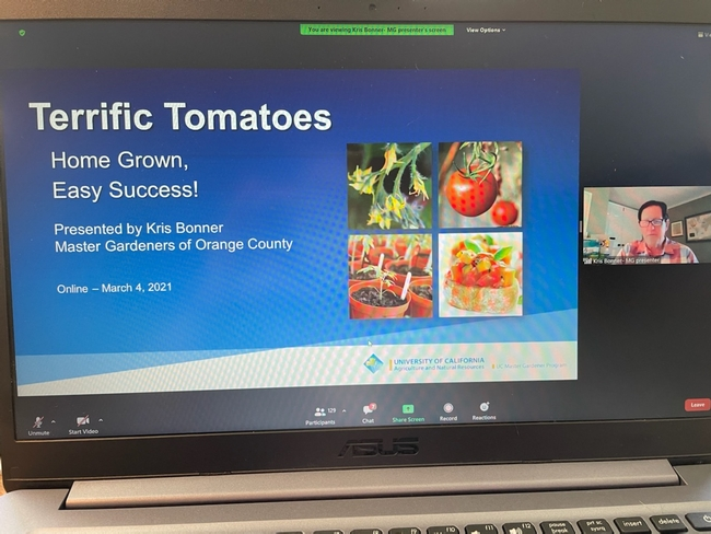 Screenshot of a Zoom presentation title slide and speaker on tomato gardening, title says Terrific Tomatoes – Home Grown, Easy Success!