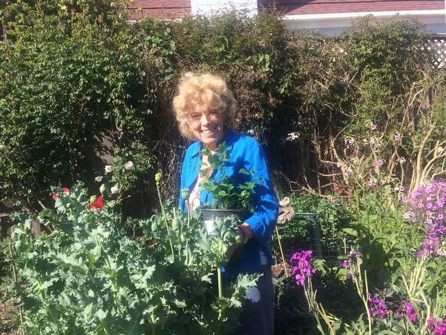Veronika Fukson in a garden of poppies in bloom, holding a pot of poppies ready to be planted.