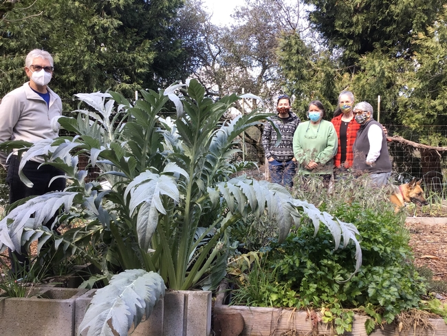 Five people, wearing facemasks to guard against the spread of COVID-19, stand on either side of a raised garden bed with a large artichoke plant growing in it.
