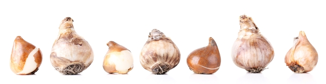 different-flower-bulbs