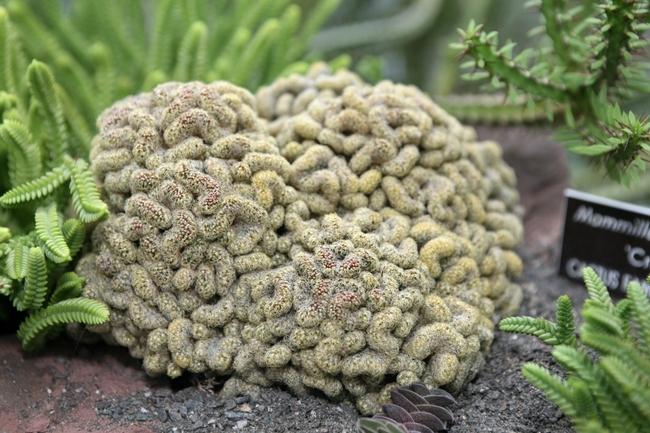 00 Cactus