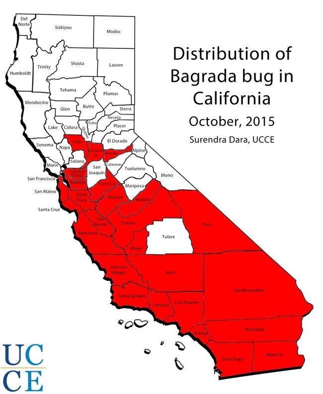 Bagrada bug distribution in California October 2015