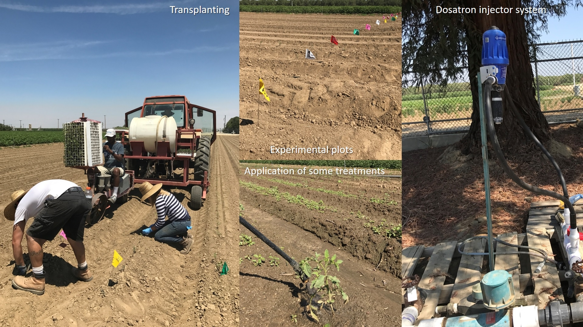 Impact of nutrient and biostimulant materials on tomato crop