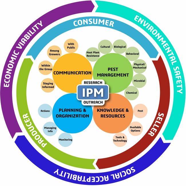New IPM Model