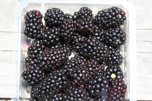 2013 Cost and Return Study now available for fresh market blackberries on the Central Coast.