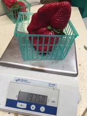At 197.5 grams, this fruit will be difficult to beat.