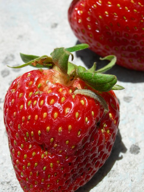 High probability LBAM on strawberry fruit