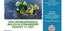BDM-Demonstration-Flyer  for Strawberries and Caneberries Blog
