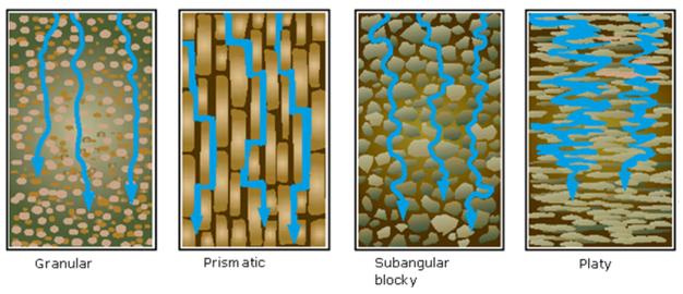 water movement