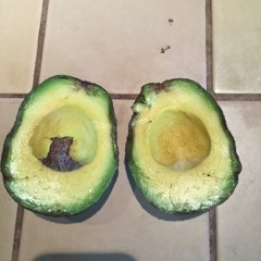 avocado body rot2