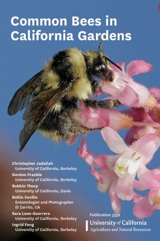 bees book frankie