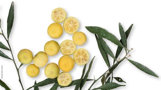lemon hlb resistant