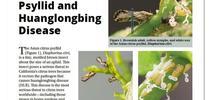Slide1 for Citrus Bugs Blog