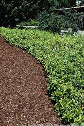 Consider mulch type if you live in an area with fire risk