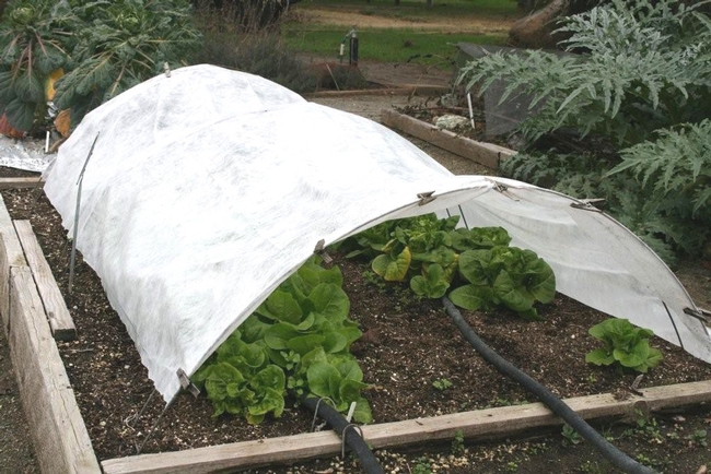 Row cover to protect cold sensitive plants and seedlings