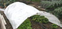 Row cover to protect scold sensitive plants and seedlings for UC Master Gardeners Santa Clara County Blog