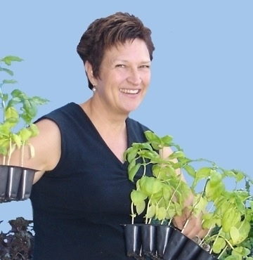 Recognizing and repairing rain damage in the garden uc - Master gardeners santa clara county ...