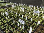 Winter vegetable seedlings