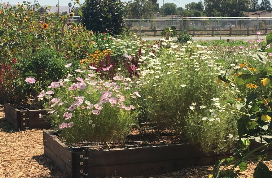 Grow a fabulous off season garden uc master gardeners - Master gardeners santa clara county ...