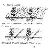 Broadcast vs. banded fertilization