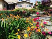 Spring flower showcase replaced a traditional lawn