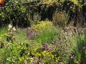 Planting a variety of attractor plants will keep your garden healthy and happy