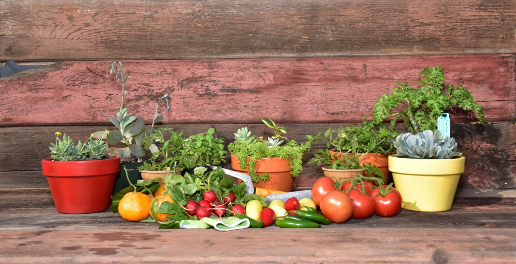 Get ready for the biggest garden events of the year uc - Master gardeners santa clara county ...