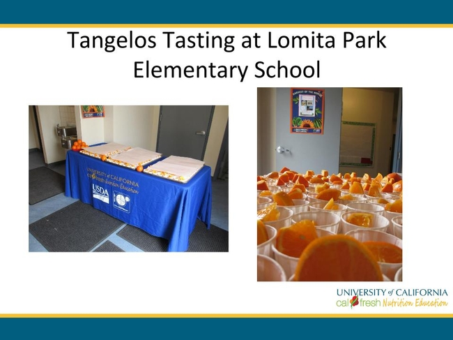 A Tangelo tasting at Lomita Park Elementary revealed that students are receptive to new, local foods!.pptx