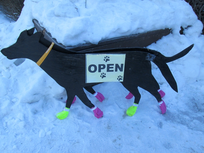 Doggies wear booties on some of the competitive contests, like the Yukon Quest