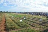 weed day 2014