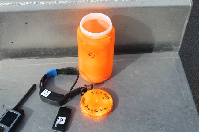 Figure 2. Setting up a drogue with radio collar and GPS recording device. The receiver for the radio collar is on the left.