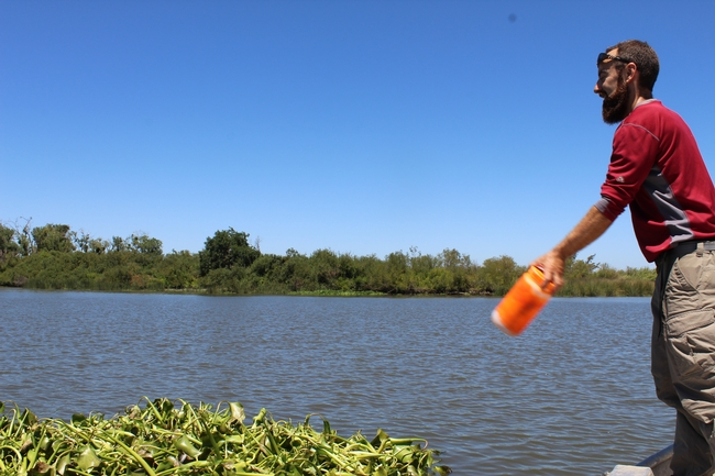 Figure 3. Deploying a GPS tracker on July 20, 2017. Sacramento-San Joaquin Delta, CA.