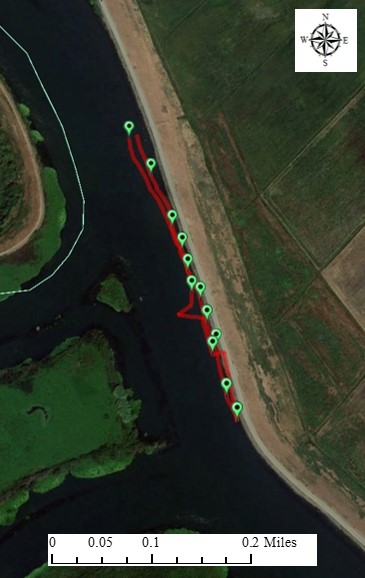 Figure 7. An example of a plant mat changing course as the tide changed. The red line records the track of the GPS in a water hyacinth mat. Next to Mandeville Island, Sacramento-San Joaquin Delta. February 7, 2018.