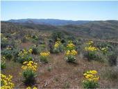 epipm 2010 Boise foothills