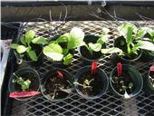 organic herb screening example WTL