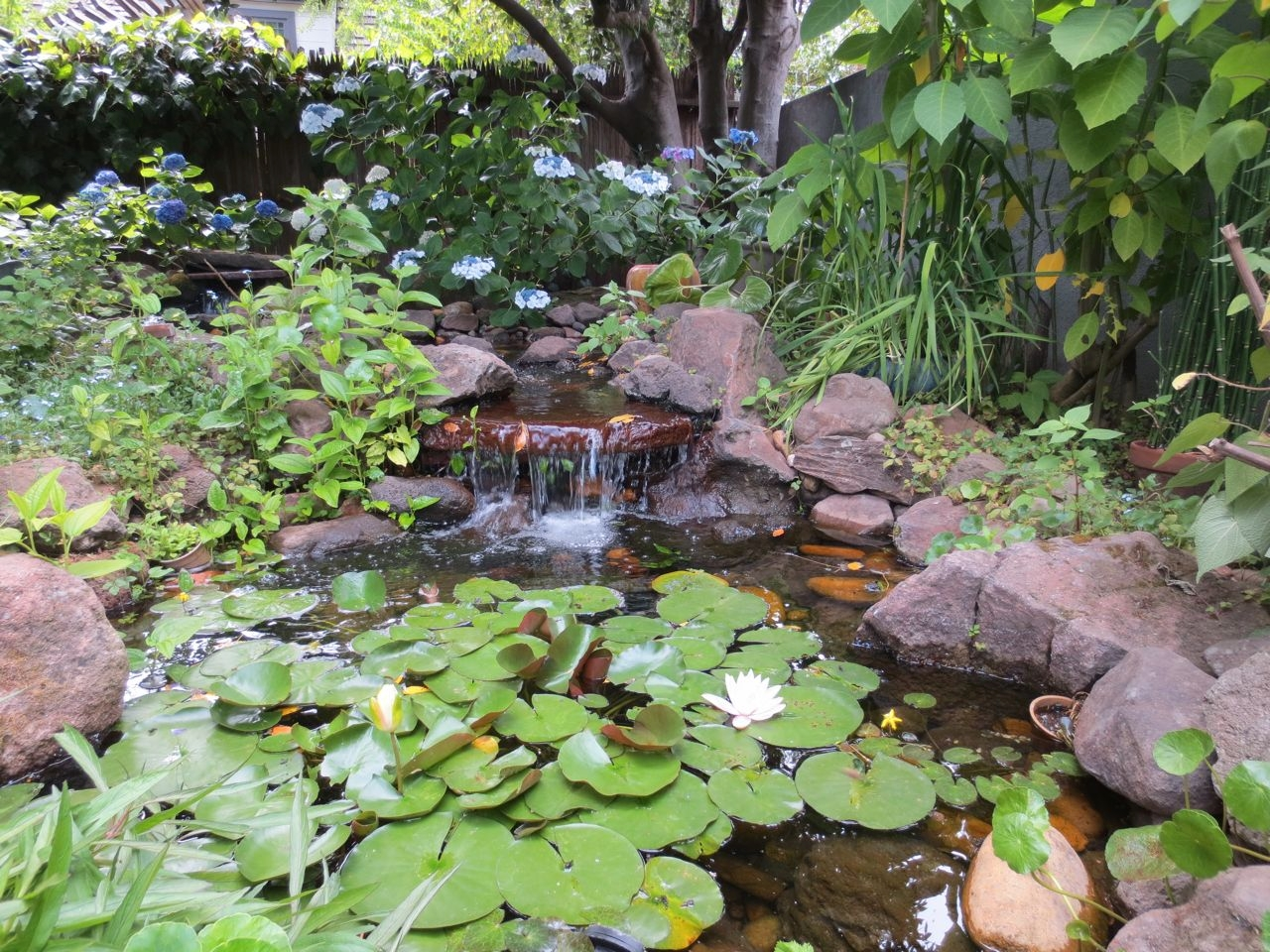 mosquito management for ponds fountains and water gardens