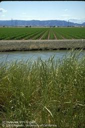Pests, Pesticides, and IPM