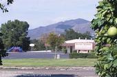 Grapefruit grove adjacent to a school. [D. Rosen]