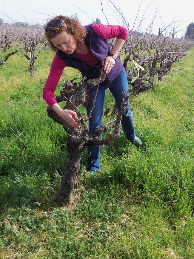 Heather Lucas pruning.