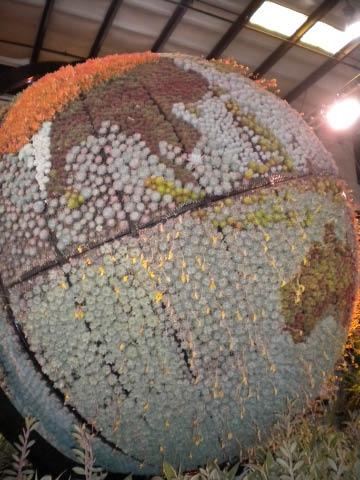 succulent globe 2