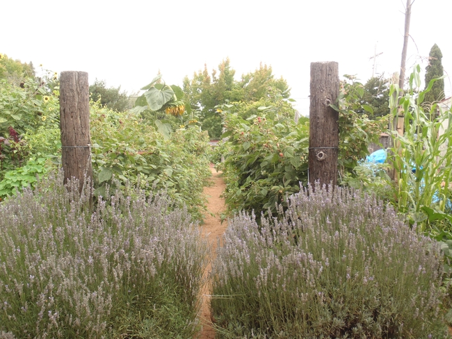 Lavendar and berries flank this pathway.