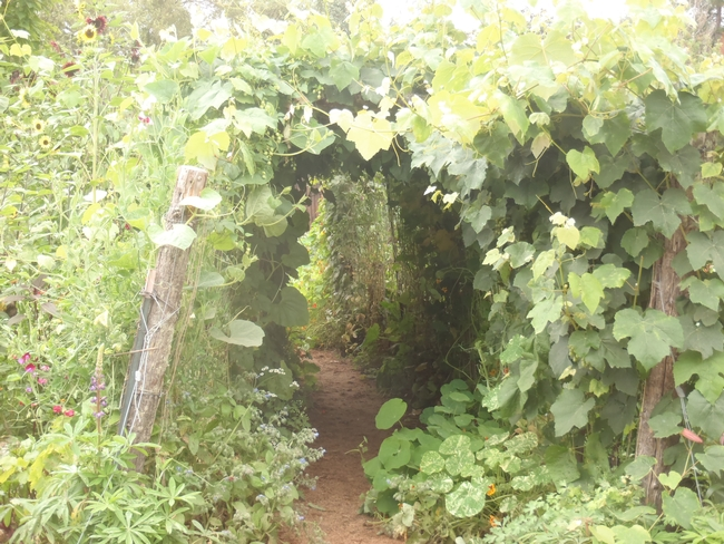 Grapevines above and nasturtiums below-enter at your own delight.