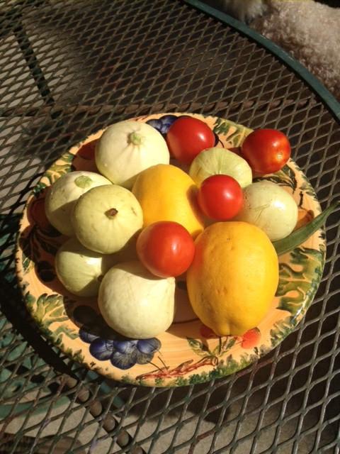Shared bounty from neighbors. (photos by Trisha Rose)